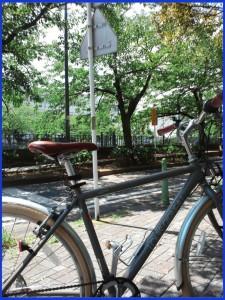 No.369 1月3日(木)自転車乗ってますか?