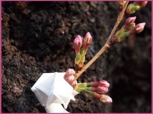 【番外編】桜咲く
